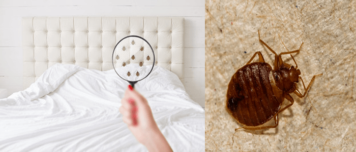 Affordable Bed Bug Control Service