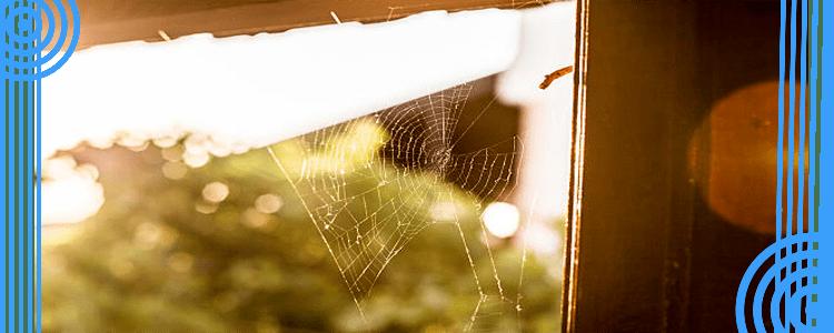 Professional Spider Pest Control Service