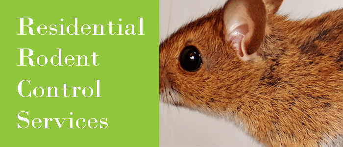 Residential Rodent Control Service